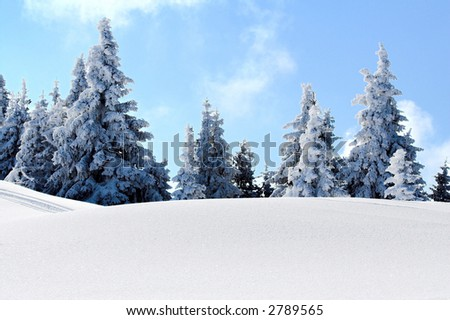 Snow mountain and trees under the snow. Winter concept