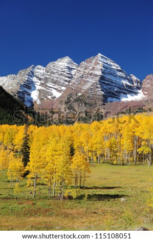 snow mountain in colorado with yellow aspen tree in autumn