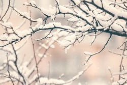Snow on a tree branches. Winter scene with vintage look.