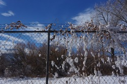 Snow on Barbedwire
