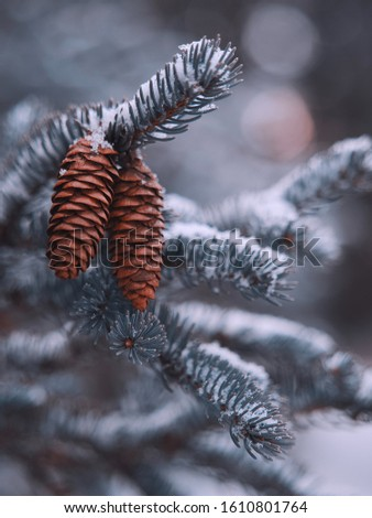 snow on branches and cones