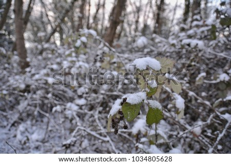 Snow on forest leaves #1034805628