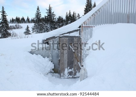 Snow piled up high in rural Alaska around a rural chicken coop with a path to the door dug out and a snow shovel leaving against a drift.