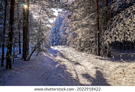 Snow road in the winter forest. Winter snow forest road. Road in winter snow forest