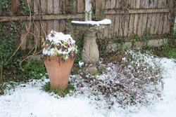 Snow scene of garden stone bird bath sculpture and plant urn earthenware pot standing on grass lawn by wood fence covered in white frozen layer in Winter landscape of rural family home garden