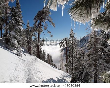 Snow shoe path through a frozen mountain forest.