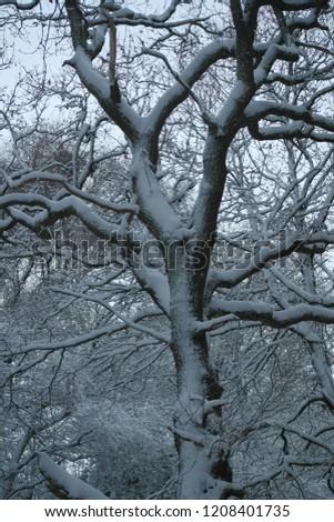 snow snow snow #1208401735