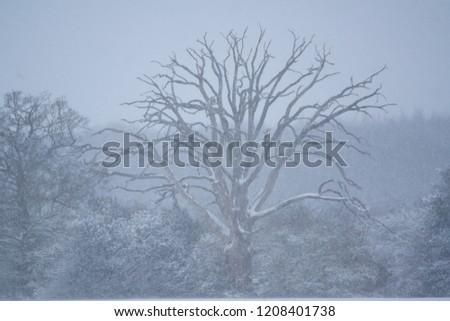 snow snow snow #1208401738