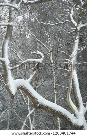 snow snow snow #1208401744
