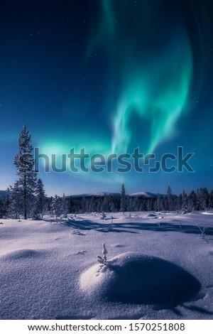 Snow sparkling in a moon light and an epic aurora borealis aka northern lights on the sky with Pallas fells on the background in Pallas-Yllästunturi national park in Muonio, Finland Foto d'archivio ©
