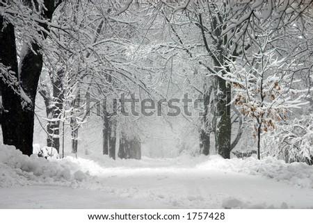 stock-photo-snow-storm-1757428.jpg