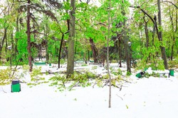 Snow storm in the spring park . Fallen broken branches after a gale