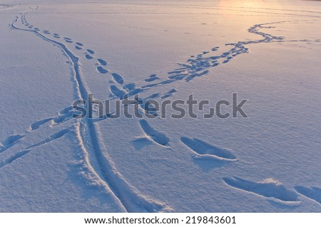 snow surface texture with animal and human traces in evening sunlight