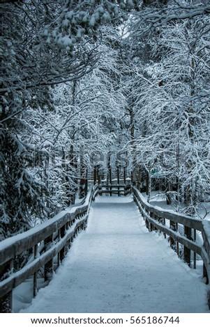 Snow track #565186744