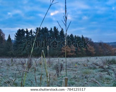 snow, wintry, trees #784125517