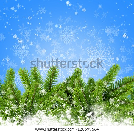 Snowbound branches of spruce are on an blue background