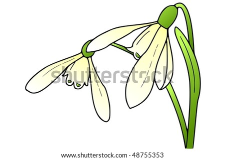 stock-photo-snowdrop-48755353.jpg