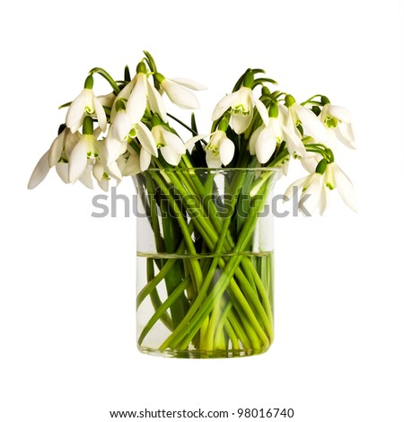 Snowdrop flowers bouquet isolated on white background