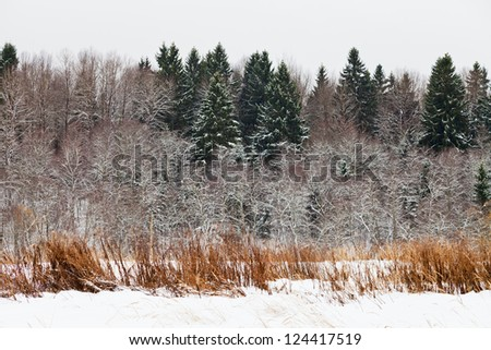 snowed spruce forest edge on a winter day - stock photo