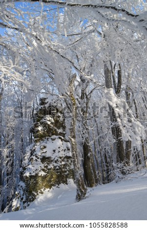 snowed stones in a forest Stock fotó ©