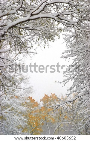 snowfall in the fall forest