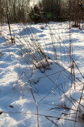 snowfall in winter and white fluffy cold snow and grass,snow that fell during a snowfall and dry grass, grass and snow in winter