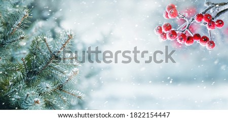 Photo of  Snowfall in winter forest, spruce branches and mountain ash in forest on blurred background during blizzard