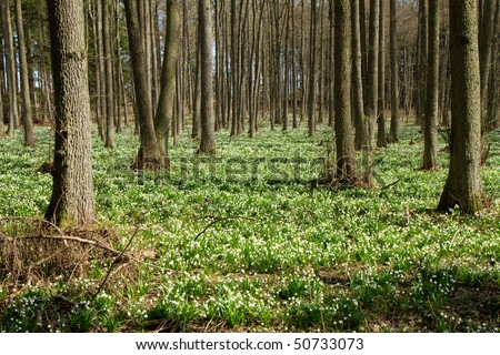 snowflake forest in the springtime