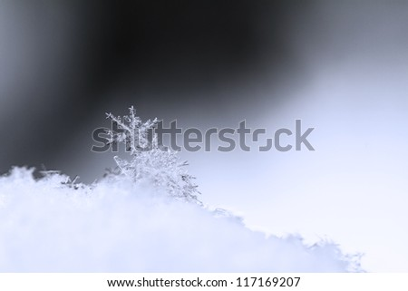 Snowflake in blue snow with crystals in good view