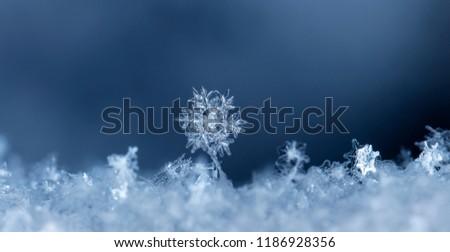 snowflake, little snowflake on the snow #1186928356