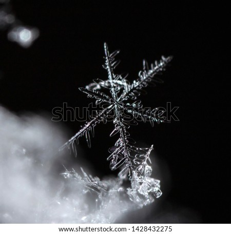 snowflake, little snowflake on the snow #1428432275