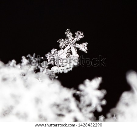snowflake, little snowflake on the snow #1428432290