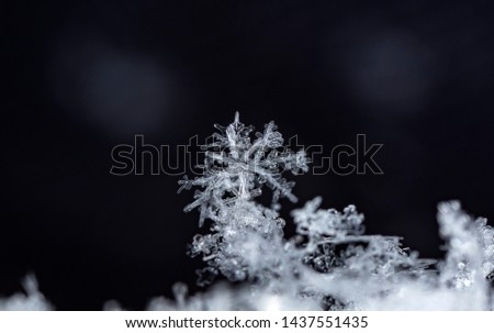 snowflake, little snowflake on the snow #1437551435