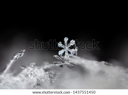 snowflake, little snowflake on the snow #1437551450