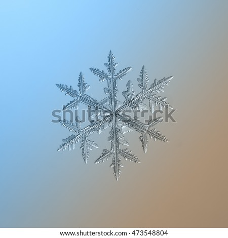 Snowflake on smooth blue-brown gradient background. This is macro photo of real snow crystal: large and symmetrical stellar dendrite with side branches and complex structure.