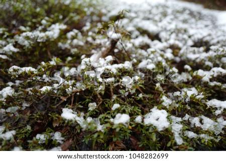 Snowflake snowflake snowflake #1048282699