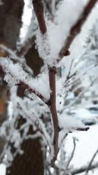 Snowflakes on the snowy tree branch