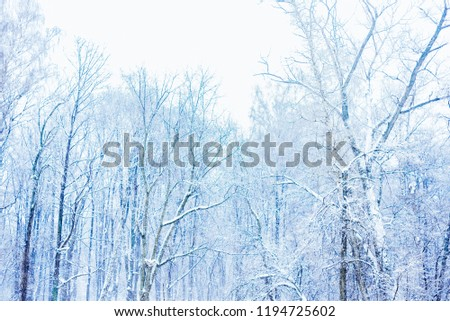 Snowing in the winter forest #1194725602