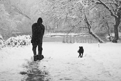Snowing landscape in the park with person cleaning the alleys and dog. Snowing makes a lovely grain-like texture