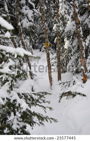 snowshoeing path and sign in snow covered pine forest near Baie Saint-Paul, Quebec, Canada