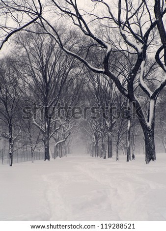 Snowstorm in Central Park