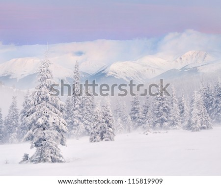Snowstorm in the mountains. Winter sunrise