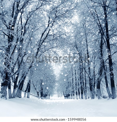 Snowstorm In Winter Park, Scenery With Trees In Sunny Cold Day.