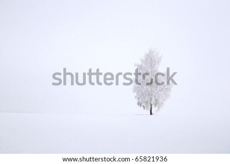 Snowy birch tree agains clear blue sky in winter landscape