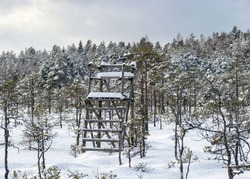 Snowy bog forest after a blizzard, amazing winter wonderland, cold weather and perfect snow conditions, snowy hunting tower in the bog,powdery snow covers the bog, Diklu district,Madiesenu bog, Latvia