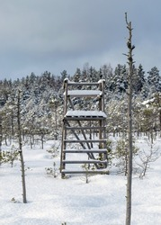 Snowy bog forest after a blizzard, amazing winter wonderland, cold weather and perfect snow conditions, snowy hunting tower in the bog, powdery snow covers the bog, Madiesenu bog, Latvia