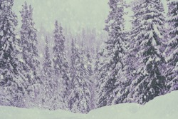 Snowy day in a forest with pinetrees covered in snow. Filters applied, purple tint