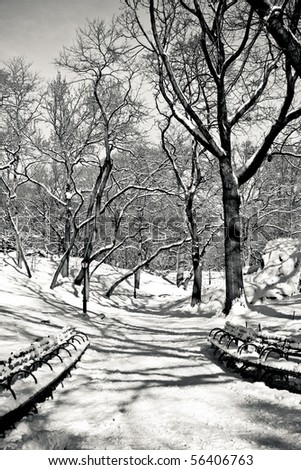 snowy day in central park 4