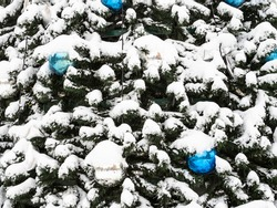 snowy decorated outdoor Christmas tree closeup on overcast winter day