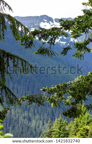 Snowy evergreens & mountain tops. Take a look at these beautiful shots of Washington States Mount Rainier. #1421832740